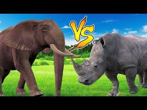 (8) Animals Finger Family Rhymes | Elephant Vs Rhino | Finger Family Song | Animals Nursery Rhymes - YouTube