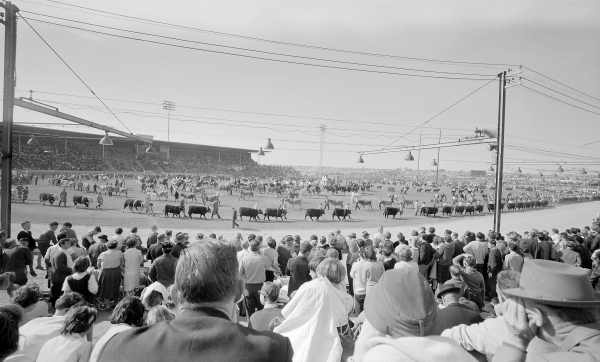 Royal Agricultural Show, Melbourne. No. 1 Night trotting. No. 5 Grand parade. [picture] , State Library of Victoria