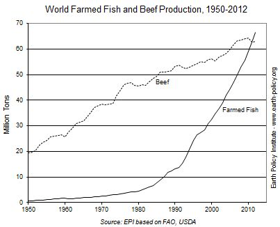 The world quietly reached a milestone in the evolution of the human diet in 2011. For the first time in modern history, world farmed fish production topped beef production. The gap widened in 2012, with output from fish farming—also called aquaculture—reaching a record 66 million tons, compared with production of beef at 63 million tons.