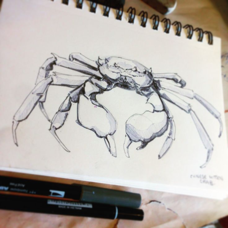 Crab done in felt pens in the Sketchbook – Crystal Smith - Check out the sketchbook for more! #sketch #sketchbook #drawing #draw #art