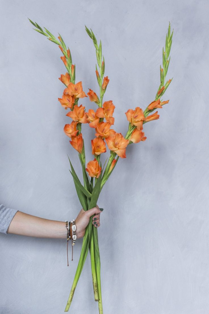 How to keep your gladioli fresher for longer