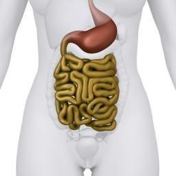 Gut bacteria improve immune system's attack on tumors