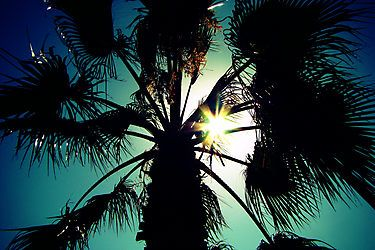 Tropical scene - French Riviera by faithie
