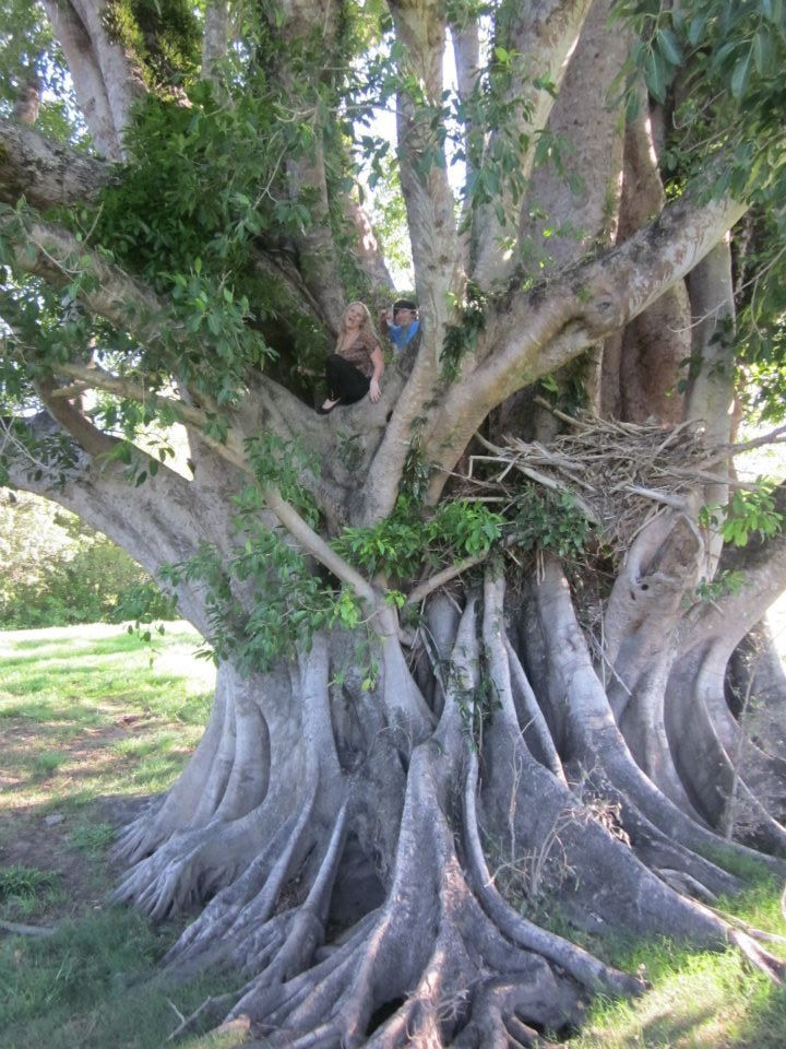 Jurassic park tree, Australia