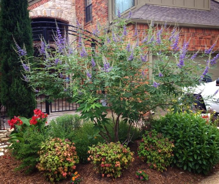 47 best my garden images on pinterest gardening raised for Best dwarf trees for front yard