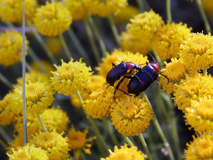 Insectos copulando | Flickr - Photo Sharing!