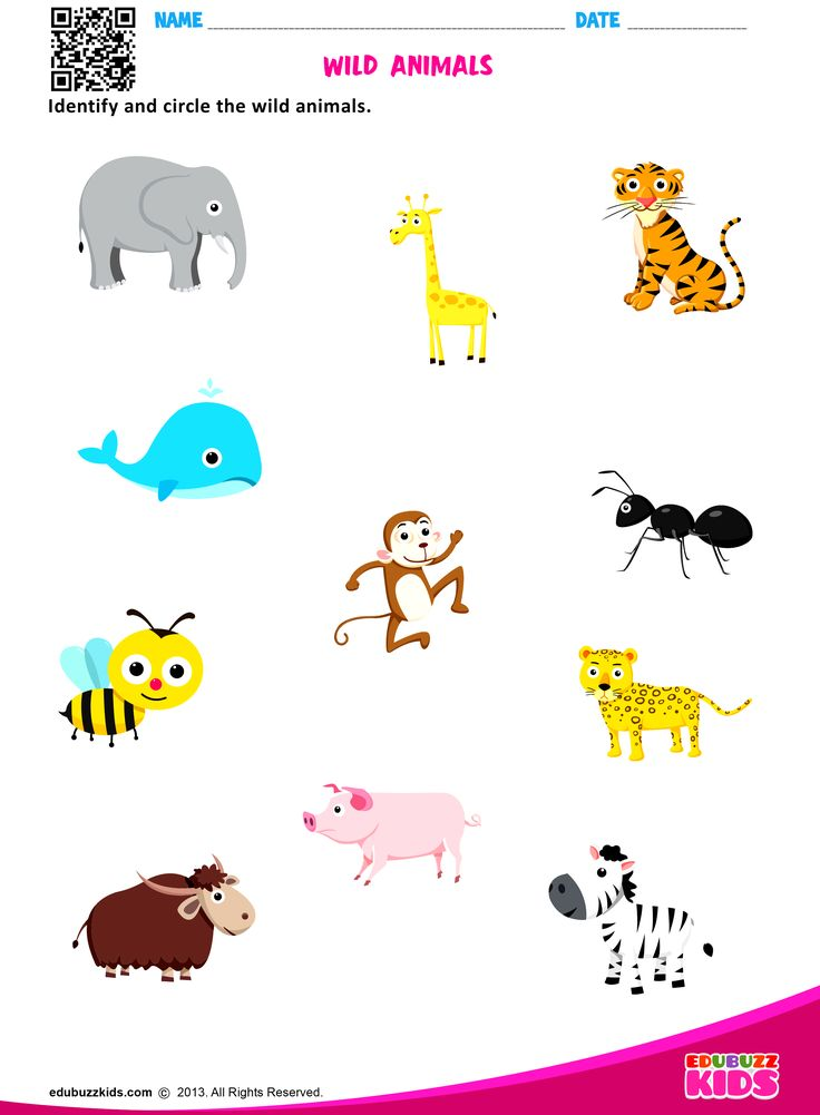 Printable Animal Worksheets For Kindergarten