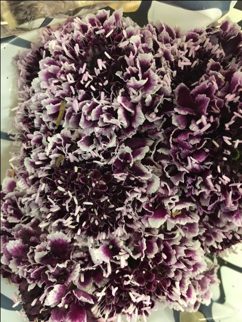 Scabiosa 'Cherry Vanilla Scoop' such a pretty little flower. Sold in bunches of 20 stems from the Flowermonger the wholesale floral home delivery service.