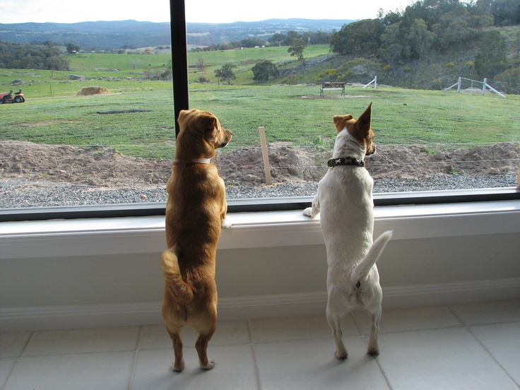 Charli & Buster enjoying the view.