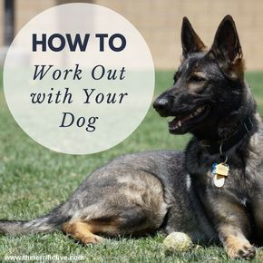 Tired of boring dog walks? How can you get a good workout in while walking your dog? Try doing HIIT (High Intense Interval Training) workouts while walking your dog to burn more calories and make your dog happy at the same time! #puppytrainingwhileatwork