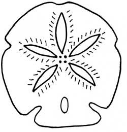 sand dollar stencil - Google Search