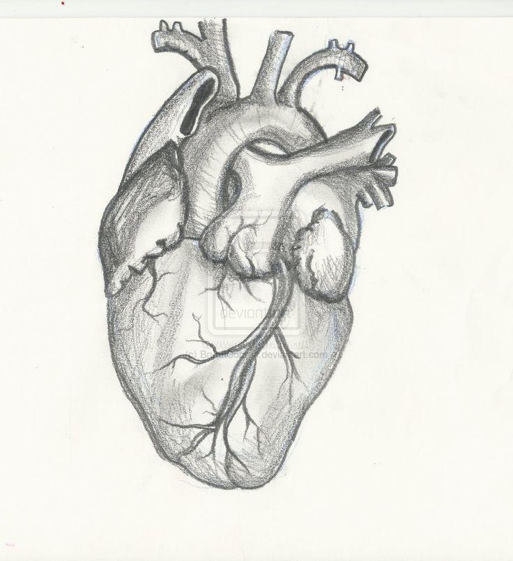 Human Heart Drawing | Design Inspiring | Human heart ...  Realistic