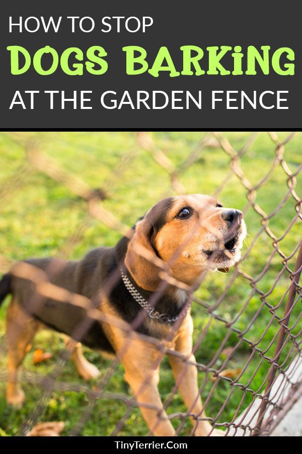 How To Stop Your Dog From Barking At The Fence Dog Barking Stop Dog Barking Dog Training
