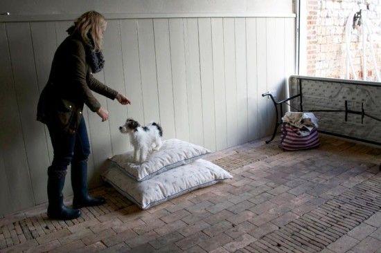 Plum and Ashby aaaaand Bertie! - under the blanketunder the blanket