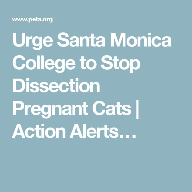 Urge Santa Monica College to Stop Dissection Pregnant Cats | Action Alerts…