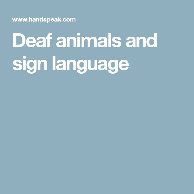 Deaf animals and sign language