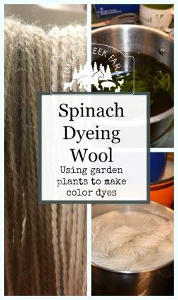 Spinach Dyeing Wool: Using garden plants to make color dye.