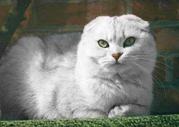 Cat C For Sale