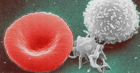 わずか3日間の断食で全免疫系が再生される。 | ラエリアンムーブメント:アジア大陸代表のブログ