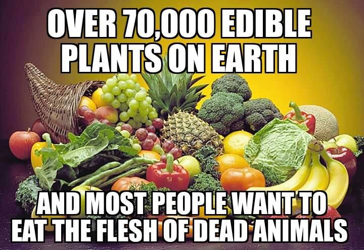 Over 70000 edible plants on Earth, and most people want to eat the flesh of dead animals. Go #vegan for cruelty-free dining