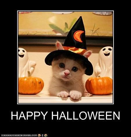 top 5 halloween lolcats scary cats to make you lol - Scary Cat Halloween Costume