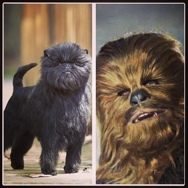 Chewbacca Dog Show
