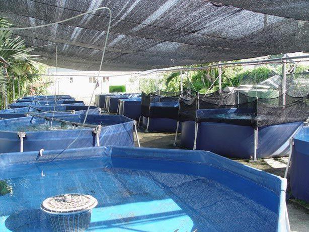 25 belas ideias de tanques de piscicultura no pinterest Piscinas para tilapias