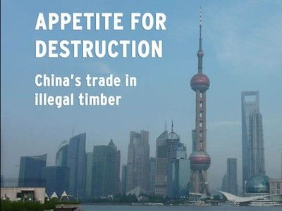 China Now World's Largest Importer of Illegal Timber (Video)
