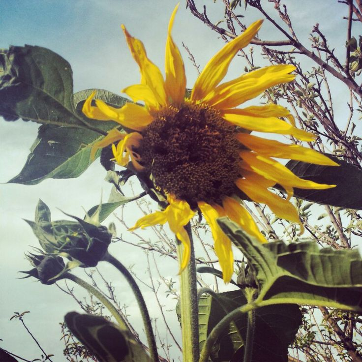 Summer mode #edimopoulou #photography