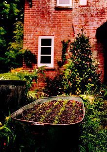 Container garden - Hugh Fearnley-Whittingstall's garden. Photo - Simon Wheeler