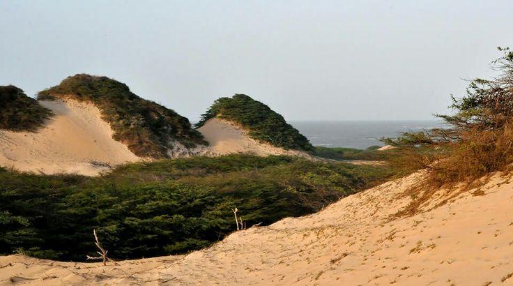 Parque Nacional Macuira ( Guajira )