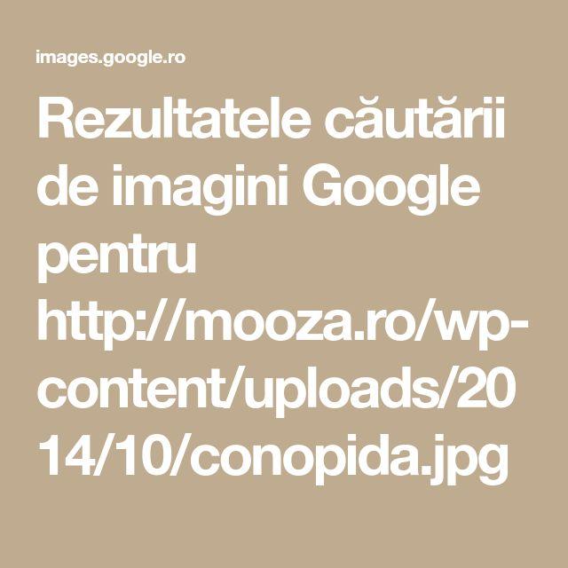 Rezultatele căutării de imagini Google pentru http://mooza.ro/wp-content/uploads/2014/10/conopida.jpg