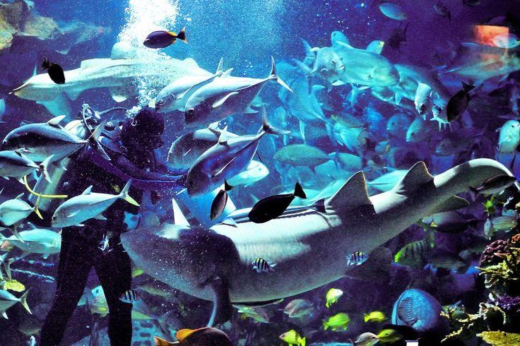 http://ru.esosedi.org/TH/50/1000464254/bolshoy_akvarium_v_zooparke/  Большой Аквариум в зоопарке – #Таиланд #Чиангмай (#TH_50) Большой аквариум, часть зоопарка в Чиангмай