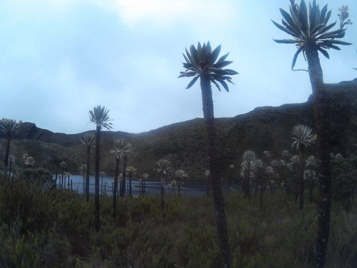 Lagunas de Siecha - Parque Nacional Natural Chingaza, Gusca, Cundinamarca. Colombia