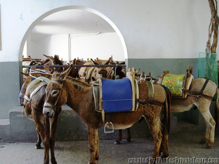 Donkeys / the Lindos Taxi - The East Coast Rhodes Island Greece