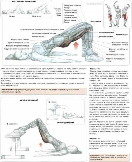 большие ягодичные мышцы и главным образом седалищно-подколенные мышцы