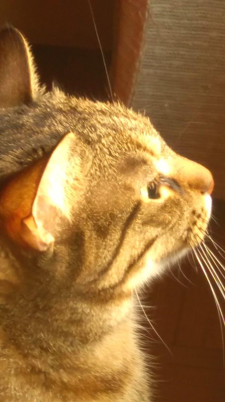 tzoutzouraki watch cat