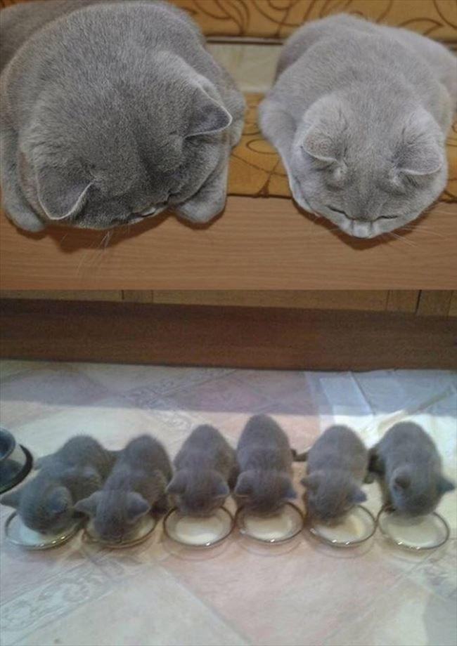 癒やし 最高に癒される可愛い動物たち 画像 Ailovei ペット用品 かわいい子猫 美しい猫