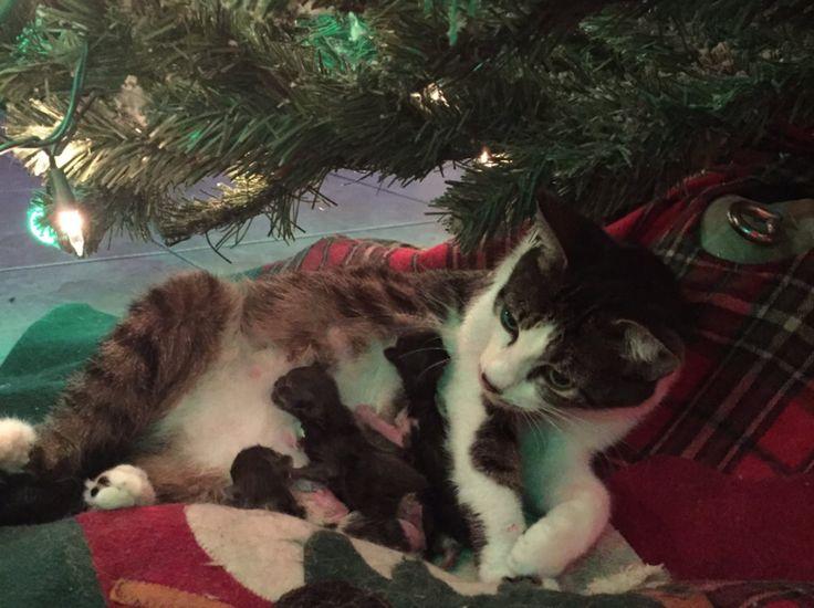 <p>PASSENDE NAVN: Noel, Joy, Christmas og Faith trygt i mammas favn. Foto: DANIELLE LOPEZ/TWITTER</p>