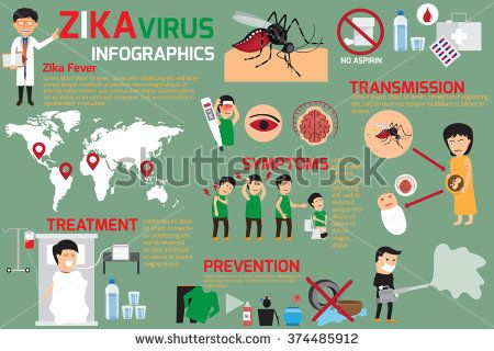 Zika virus infographic elements, transmission, prevention, symptoms and treatment, zika fever element vector concept.