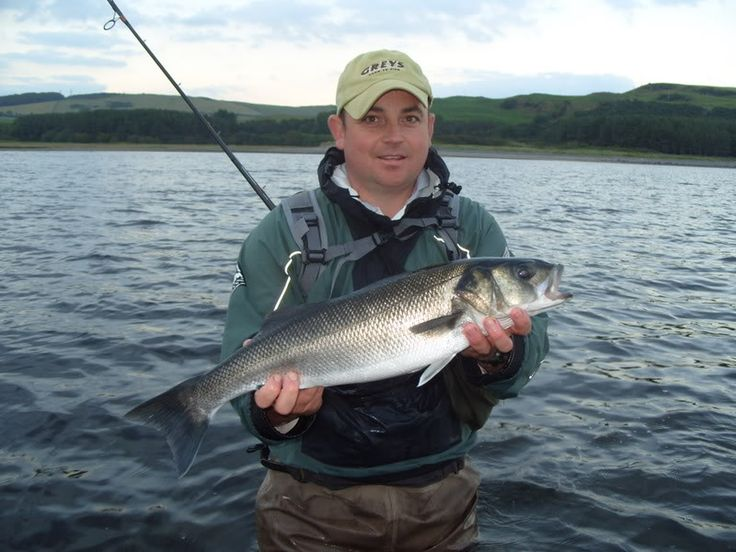 10 best buckley striper guide service images on pinterest for Best time to go bass fishing
