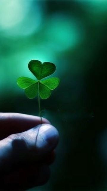 The shamrock remains the premier symbol of the Irish people. Its powerful message stems from the legend of St. Patrick, Ireland's patron saint, who used the simple trefoil (or clover) plant to illustrate the presence of God in the natural world. Each leaf of the shamrock was meant to represent the holy trinity...the Father, the Son and the Holy Spirit.