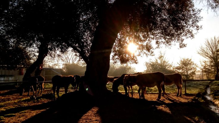 Morning sun at the donkey shelter