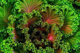Plant, Mangel, Kale, Food, Healthy