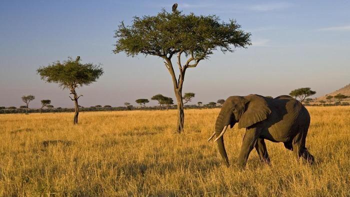 https://aos.iacpublishinglabs.com/question/aq/700px-394px/food-chain-savanna_a739a3913da03f0.jpg?domain=cx.aos.ask.com