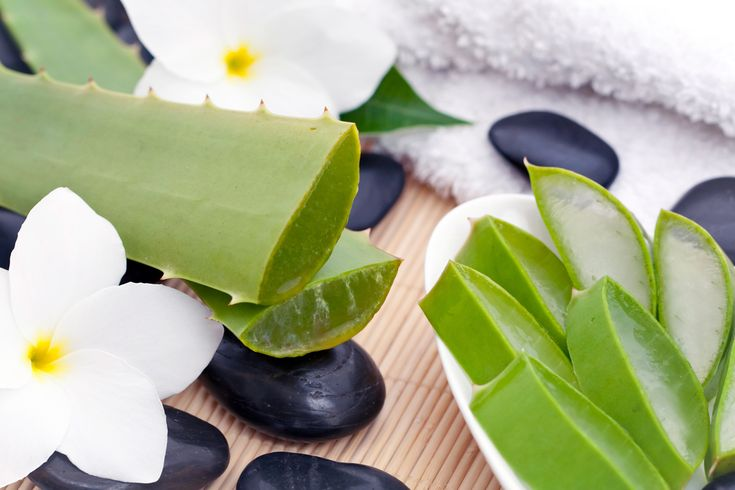 The latest, and perhaps most exciting component discovered in Aloe vera is a biologically active polysaccharide known as acetylated mannose, or acemannan. This substance has been shown to be a highly effective immune stimulant. http://aloeliving.net/napitki