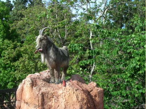 """For the adventure-seekers: Employ """"The Goat Trick"""" for an extra-thrilling ride on Big Mountain.   16 Awesome Hidden Gems You Must Experience At Disneyland"""
