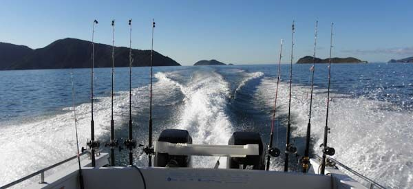 catch your dinner on the way, come out on a fishing charter with the MV Tory - and let the chefs create supper