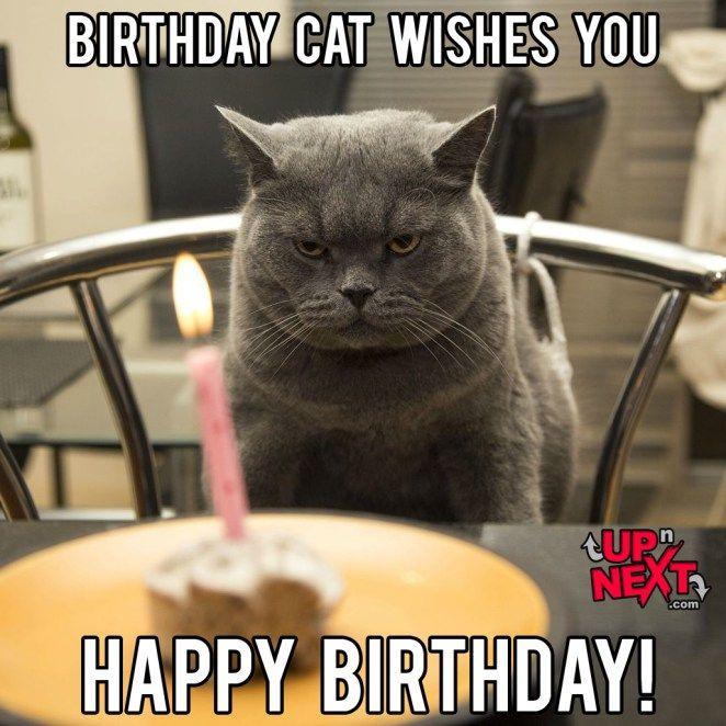 Funny Happy Birthday Celebration Memes Funny Birthday Meme Cat Birthday Memes Happy Birthday Meme