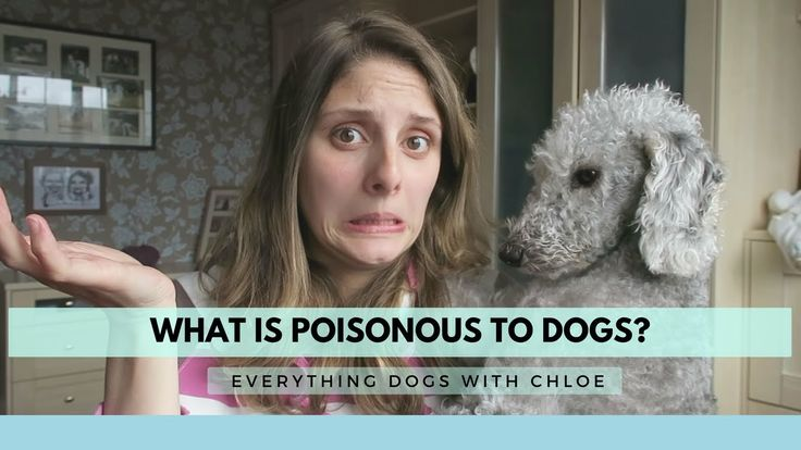 WHAT IS POISONOUS TO DOGS? - MY TOP 5